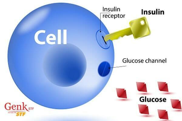 Kháng insulin là nguyên nhân dẫn đến buồng trứng đa nang