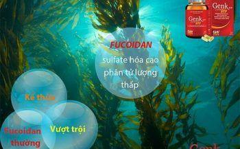 Fucoidan sulfate hóa – xoa dịu nỗi đau cho bệnh nhân ung thư