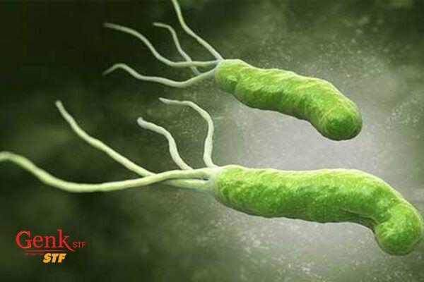 Nhiễm khuẩn Helicobacter pylori được cho là nguyên nhân của đa số các loại ung thư dạ dày
