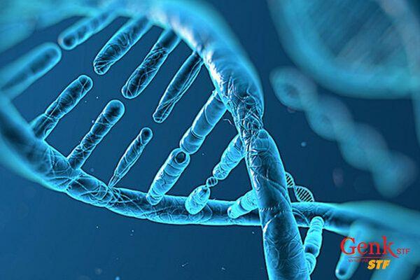 Những thay đổi DNA bật gen sinh ung hoặc tắt gen ức chế khối u có thể gây ung thư.