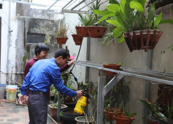 Chị Nguyễn Thị Hường và anh Nguyễn Văn Bích chăm sóc những giò hoa phong lan trong vườn nhà.