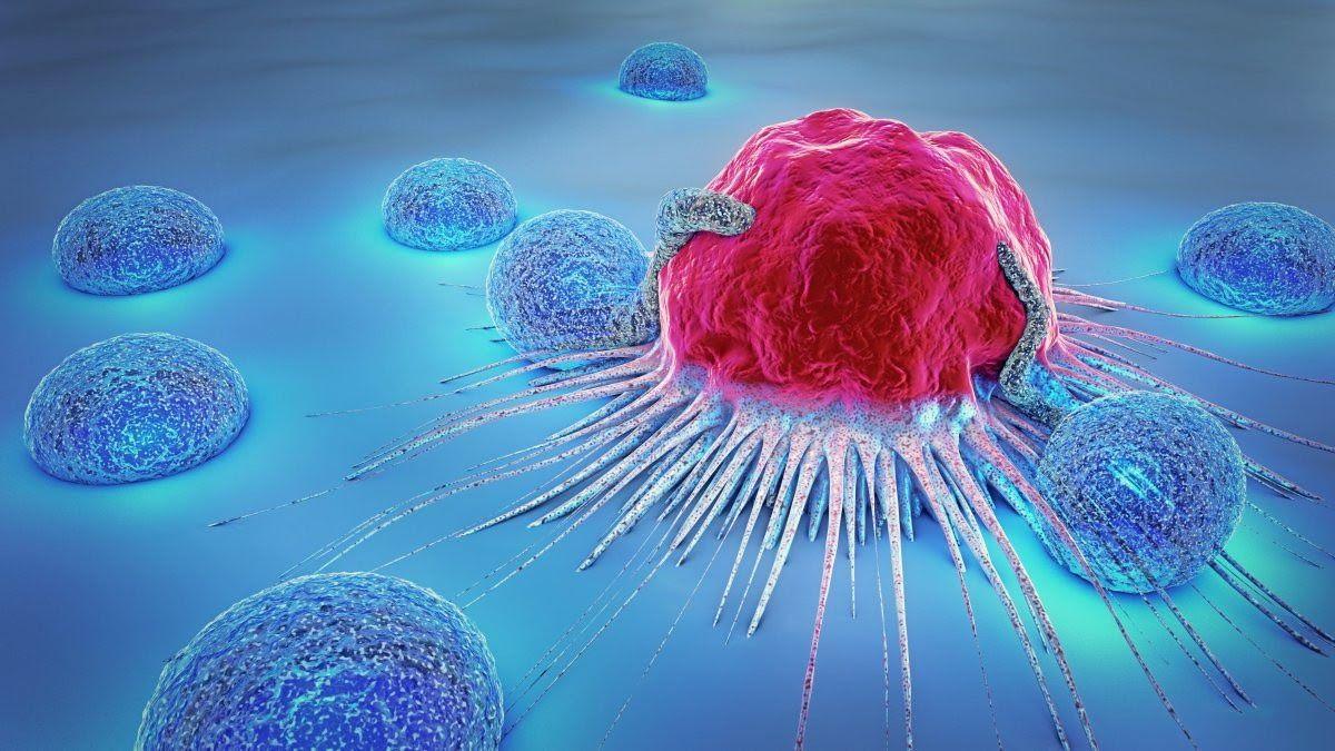 Fucoidan có tốt không? Fucoidan giúp hỗ trợ điều trị ung thư