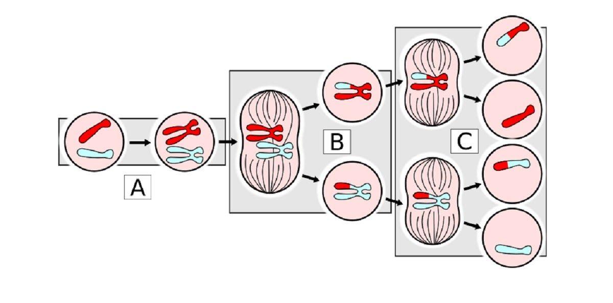 Quá trình phân chia tế bào ung thư