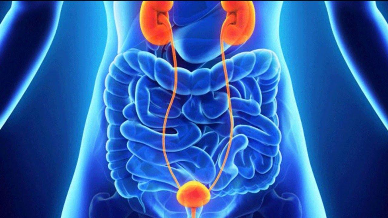 Ung thư bàng quang là bệnh lý ác tính bắt nguồn từ khối u trong bàng quang