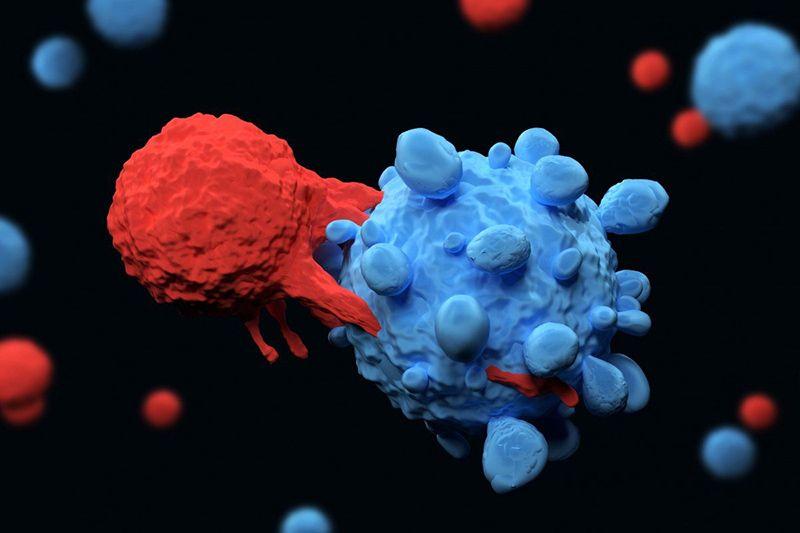 Đại thực bào nhận diện và tiêu diệt tế bào ung thư