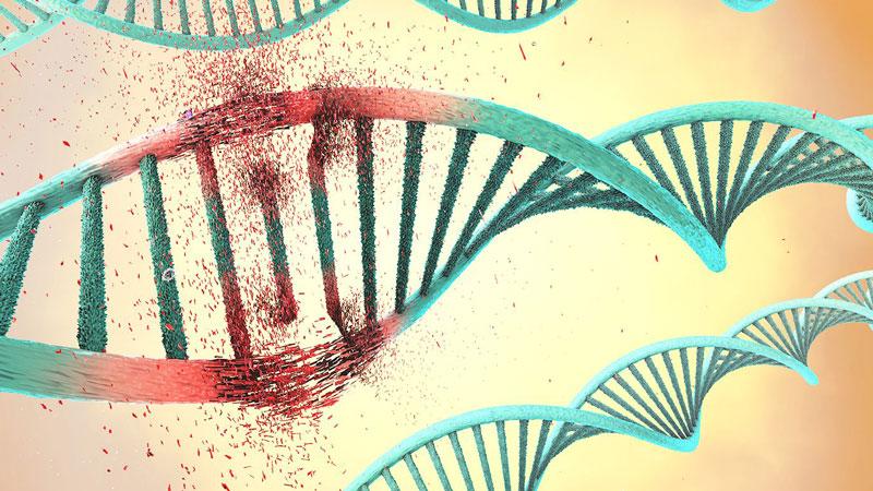 Điều trị ung thư dạ dày bằng liệu pháp gen mục tiêu