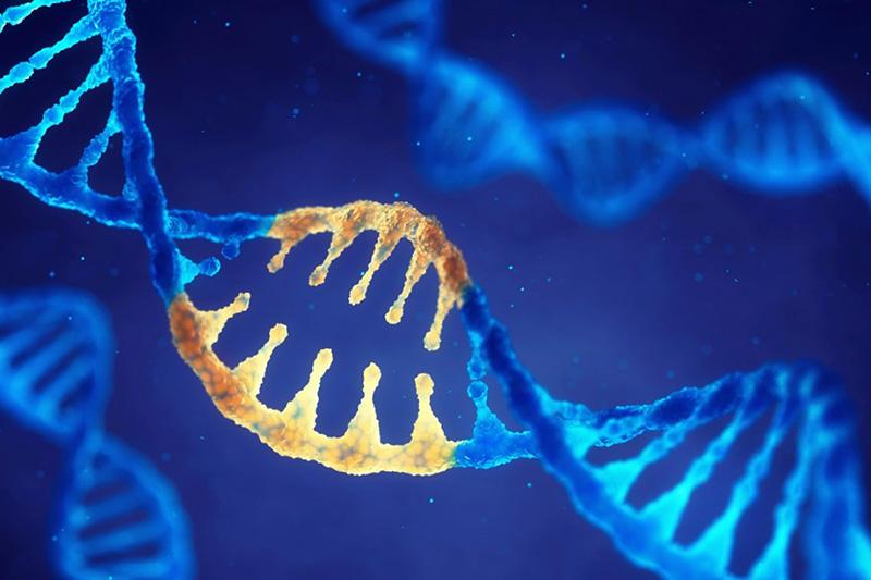 Phát hiện những cấu trúc gen bị đột biến ở các tế bào ung thư gan