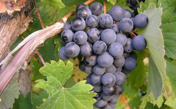 7 loại trái cây phòng chống ung thư hiệu quả