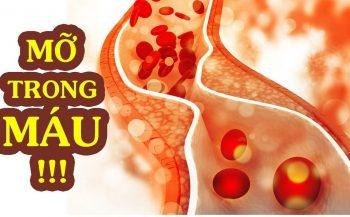 Những loại thảo dược giúp hạ mỡ máu tốt nhất hiện nay